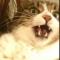 Аватарка пользователя KoteNik